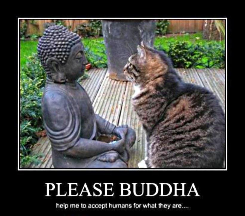 [Image: cat-praying-to-buddha-for-humans.jpg]