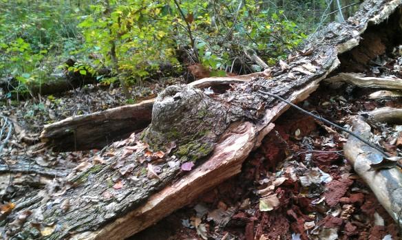 oak hole 5