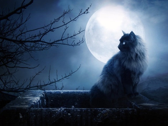 cat moon (2)