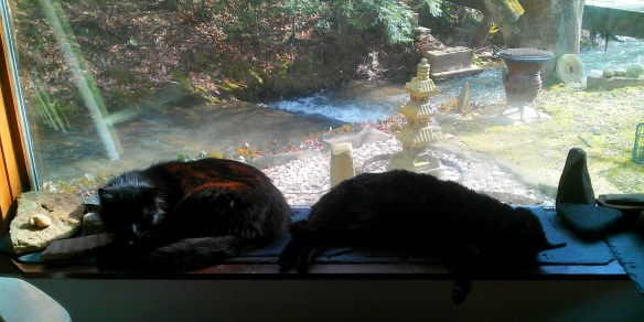 Cats in the Sun on Imbolc (1)