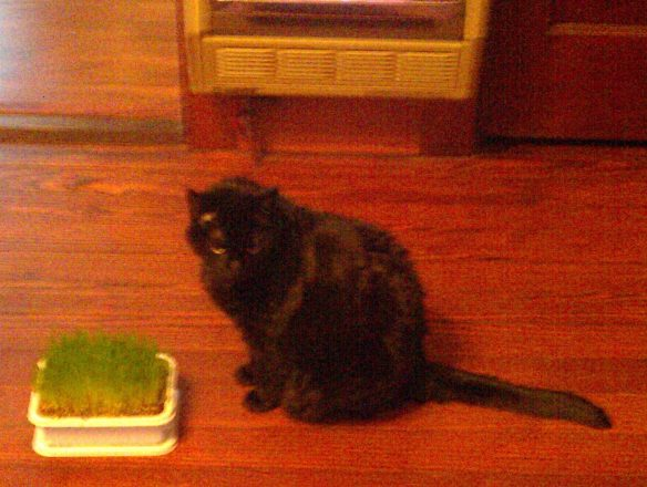 Shadow cat grass heater