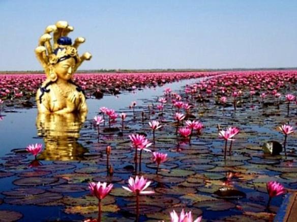 Nagini lotus pond